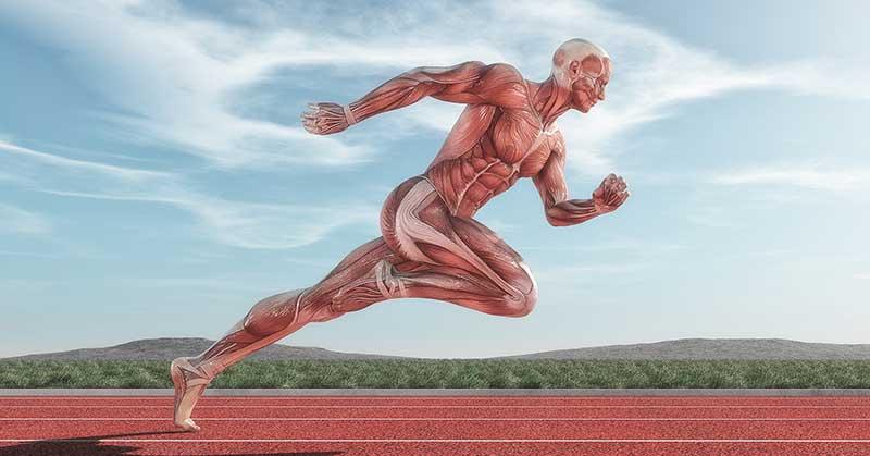 Do Horizontal Plyometrics and Weight Exercises Develop